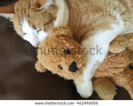 Ginger and white cat with a generic, well-loved teddy bear