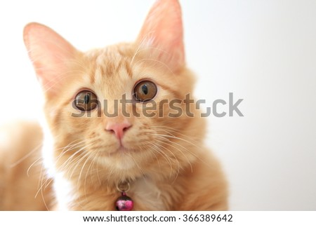ginger cat pussy - photo #48
