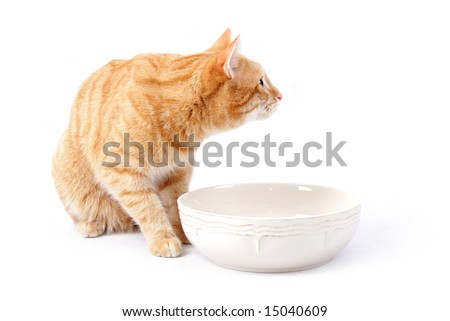 ginger cat at the empty bowl - stock photo