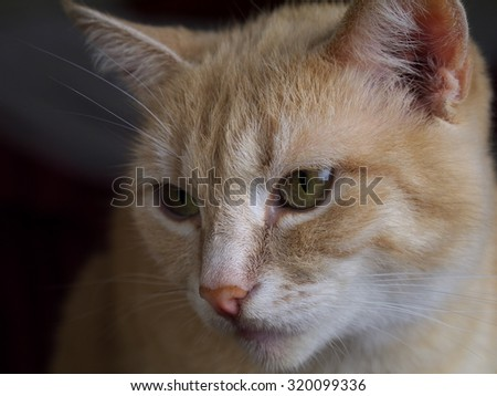 ginger cat closeup, shallow depth of field - stock photo