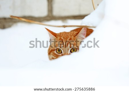 Ginger cat in snow on brick wall background - stock photo