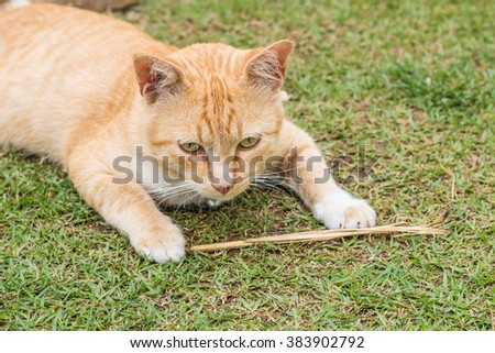 Ginger cat in the garden