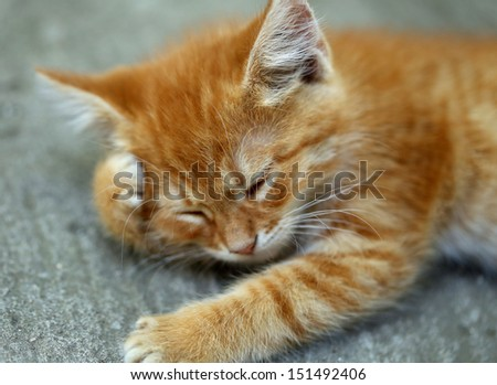 Ginger cat is having a rest.