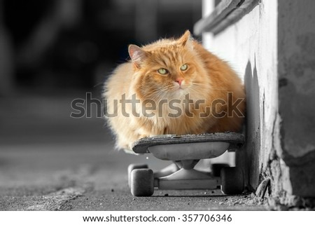 Ginger cat lays on a skateboard on the street in summer day - stock photo