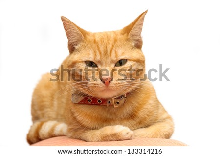 Ginger cat looking at the camera - stock photo