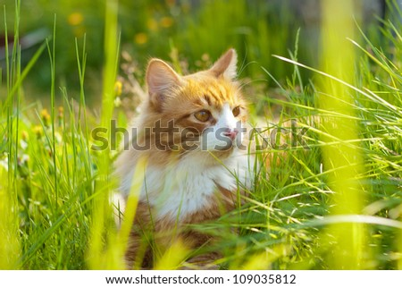 Ginger cat  lying at grass - stock photo