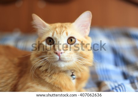 Ginger cat lying on the bed. - stock photo
