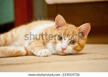 Ginger cat lying on the floor at home