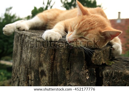 Ginger cat lying on the stump in the country home garden. - stock photo