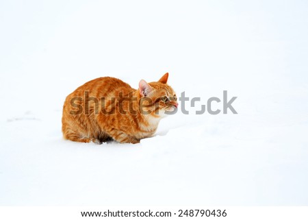 Ginger cat on snow background - stock photo
