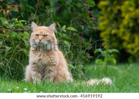 Ginger cat on the green grass