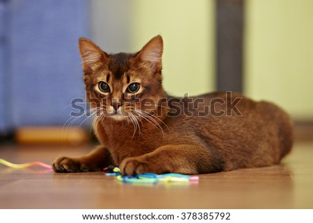 ginger cat playing with toy