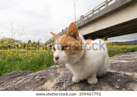 Ginger cat sit near the river in Kyoto, Japan. - stock photo