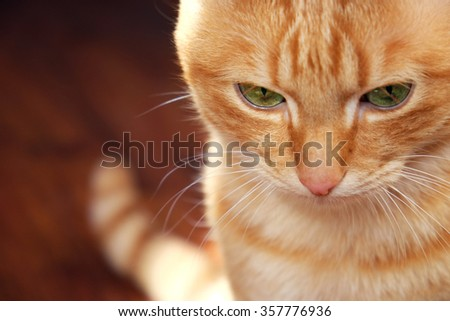 Ginger cat sitting on wooden background - stock photo