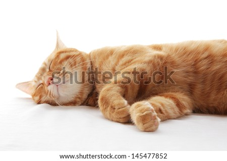 Ginger cat sleeping on the bed - stock photo