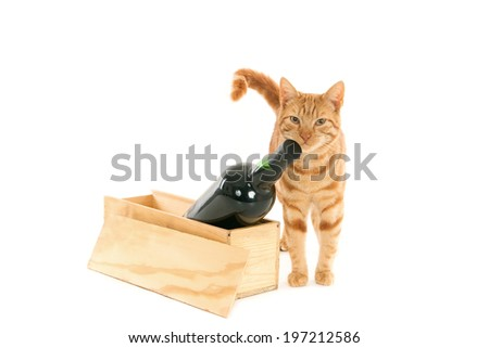 Ginger cat staring close to a bottle of (brand-less) port in a wooden box, isolated on white