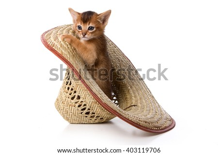 Ginger kitten Abyssinian cat and hat (isolated on white) - stock photo