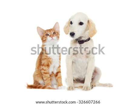ginger kitten and beige puppy looking