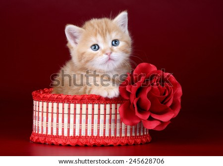 Ginger kitten sitting in box with a rose