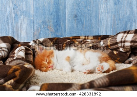 Ginger kitten with white chest.  - stock photo