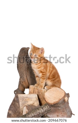 Ginger kitten with wooden bird sitting on firewood, isolated on white