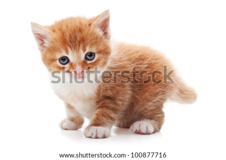 ginger kitty isolated on a white background - stock photo