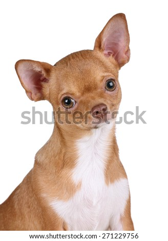 Ginger puppy close-up portrait - stock photo