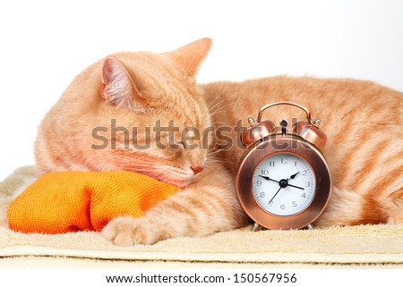 Ginger sleeping cat isolated on white background. - stock photo