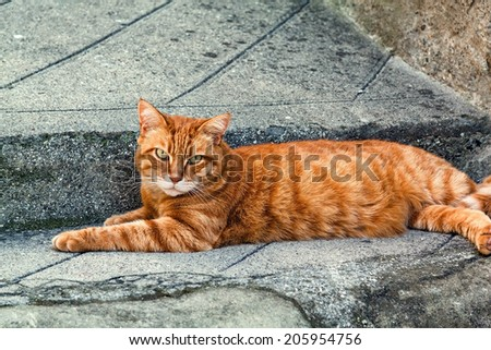 Ginger striped cat sitting on a pavement in Entrevaux, France. - stock photo