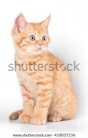 Ginger tabby kitten - stock photo