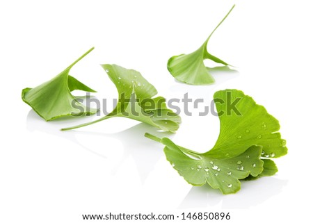 Ginkgo leaves with water droplets isolated on white background with reflection. Alternative medicine, nutritional supplement. - stock photo