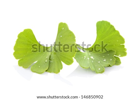 Ginkgo leaves with water drops isolated on white background. Healthy living. - stock photo