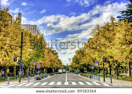 Ginkgo trees at Kanagawa Prefectural Government Street in autumn, Yokohama, Japan. - stock photo