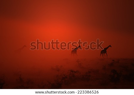 Giraffe - African Wildlife Background - Out of the Dust came walking the Gentle Giant - stock photo