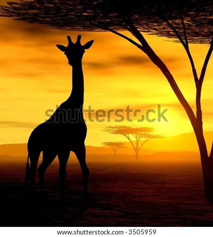 giraffe in the evening - stock photo