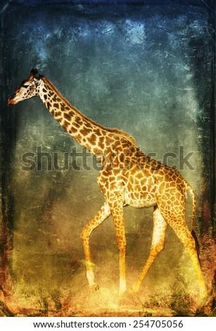 Giraffe isolated on textured grunge background - stock photo