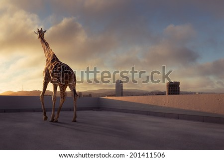Giraffe on the rooftop - stock photo