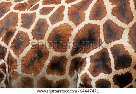 Giraffe pattern - stock photo