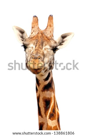 Giraffe portrait isolated on white - stock photo