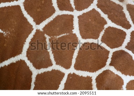giraffe skin and hair texture - stock photo