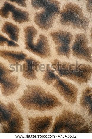 giraffe skin texture and background - stock photo