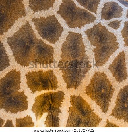 Giraffe skin texture background - stock photo