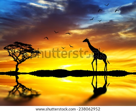 Giraffe walking along the lake shore - stock photo