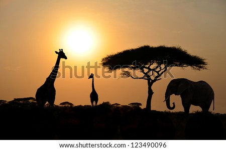 Giraffes and Elephant Silhouettes with Acacia tree with Sunset on Safari in Serengeti National Park in Tanzania - Africa - stock photo