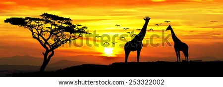 giraffes in the landscape - stock photo