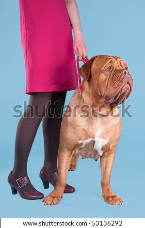 Girl and her dog de bordeaux  on a leash - stock photo