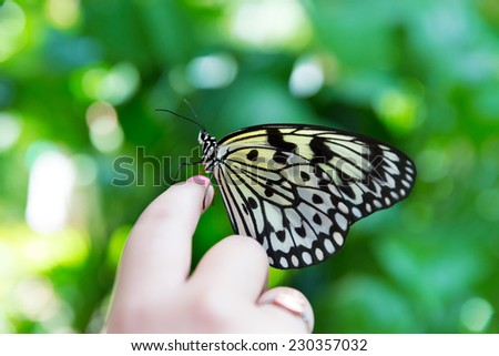 Girl hand finger Rice Paper butterfly Idea leuconoe in outdoor - stock photo