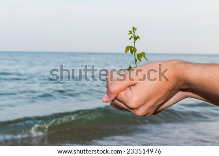Girl hand holding and planting new tree with sand and sea - stock photo
