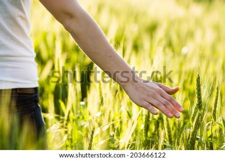 Girl hand touching wheat. Fresh harvest. - stock photo