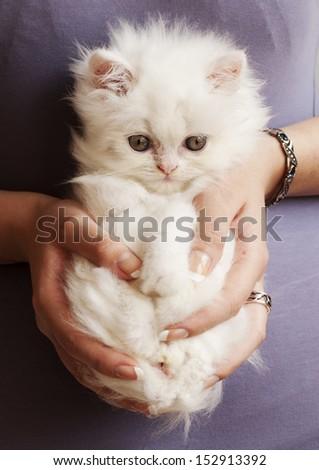 Girl holding an adorable white fluffy Persian kitten - stock photo